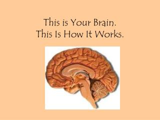 This is Your Brain.  This Is How It Works.