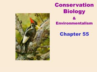 Conservation Biology & Environmentalism