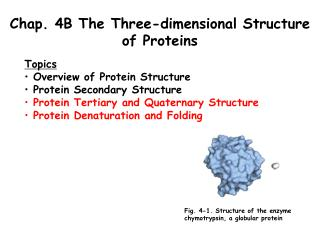Chap. 4B The Three-dimensional Structure of Proteins