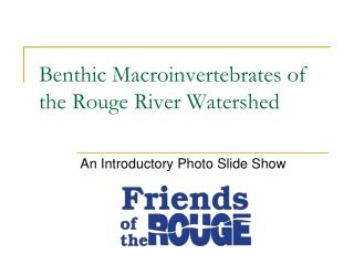 Benthic Macroinvertebrates of the Rouge River Watershed