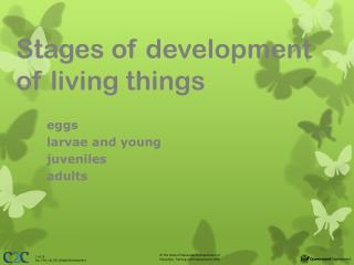 Stages of development of living things