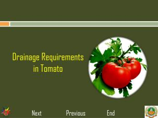 Drainage Requirements in Tomato