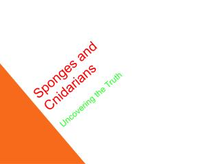 Sponges and Cnidarians Uncovering the Truth