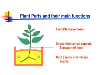 Plant Parts and their main functions