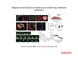 TI Arnon  et al. Nature  000 , 1-5 (2012) doi:10.1038/nature11738