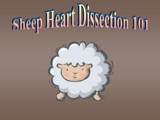 Sheep Heart Dissection 101
