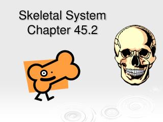 Skeletal System Chapter 45.2