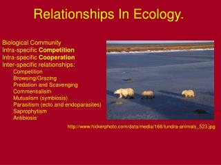 Relationships In Ecology.