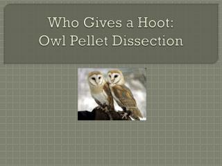 Who Gives a Hoot: Owl Pellet Dissection