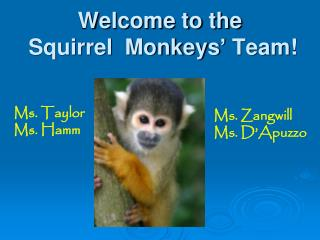 Welcome to the  Squirrel  Monkeys '  Team!