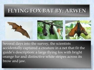 FLYING FOX BAT BY: ARWEN