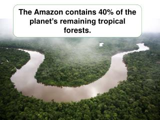 The  Amazon contains 40% of the planet's remaining tropical forests.