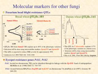Molecular markers for other fungi