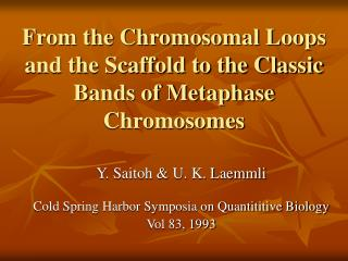 From the Chromosomal Loops and the Scaffold to the Classic Bands of Metaphase Chromosomes