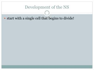 Development of the NS