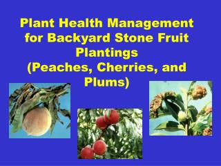 Plant Health Management for Backyard Stone Fruit Plantings  (Peaches, Cherries, and Plums)