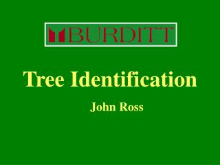 Tree Identification 				John Ross