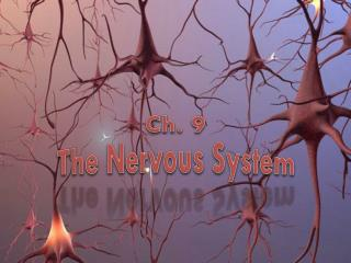 Ch. 9 The Nervous System