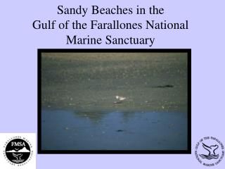 Sandy Beaches in the  Gulf of the Farallones National Marine Sanctuary