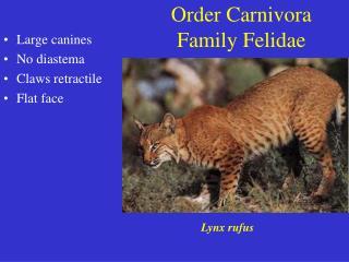 Order Carnivora Family Felidae