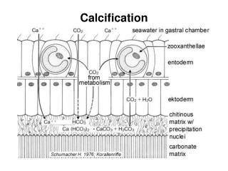Calcification