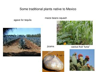 Some traditional plants native to Mexico