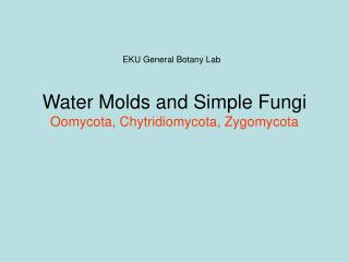 Water Molds and Simple Fungi Oomycota, Chytridiomycota, Zygomycota