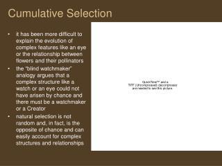 Cumulative Selection
