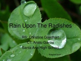 Rain Upon The Radishes