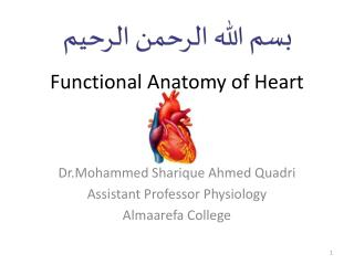 Functional Anatomy of Heart