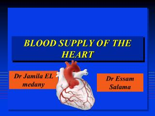 BLOOD SUPPLY OF THE HEART