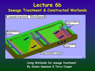 Lecture 6b Sewage Treatment & Constructed Wetlands