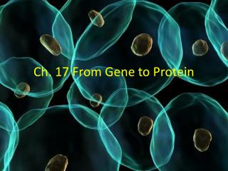 Ch. 17 From Gene to Protein