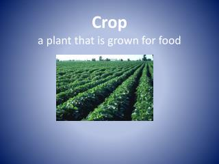Crop a plant that is grown for food