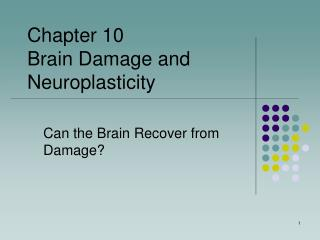 Can the Brain Recover from Damage?