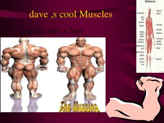 dave ,s cool Muscles