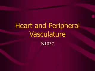 Heart and Peripheral Vasculature