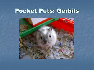 Pocket Pets: Gerbils