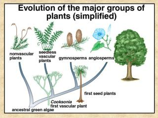 Land Plants fall into two major groups