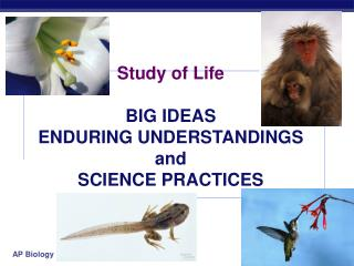 Study of Life BIG IDEAS ENDURING UNDERSTANDINGS and SCIENCE PRACTICES