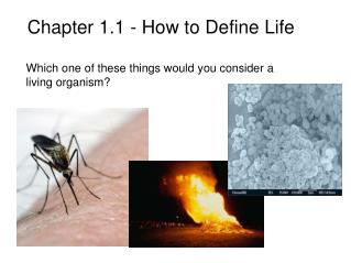 Chapter 1.1 - How to Define Life