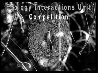 Ecology Interactions  Unit Competition