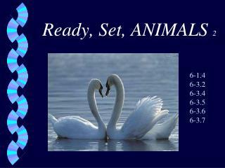 Ready, Set, ANIMALS 2