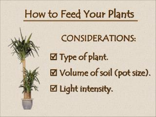 How to Feed Your Plants