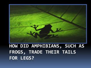 How did amphibians, such as frogs, trade their tails for legs?
