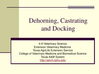 Dehorning, Castrating and Docking