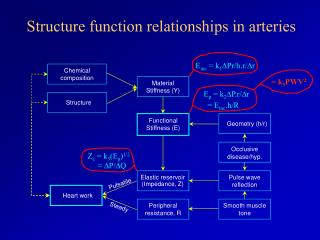 Structure function relationships in arteries