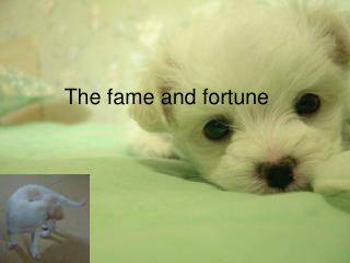 The fame and fortune