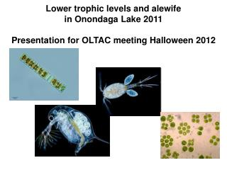 Lower trophic levels and alewife in Onondaga Lake 2011