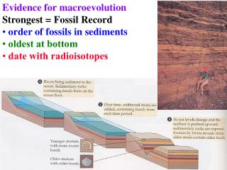 Evidence for macroevolution  Strongest = Fossil Record  order of fossils in sediments